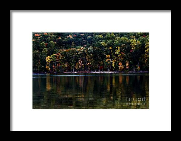 Trees Framed Print featuring the photograph Tree Reflections by Robin Lynne Schwind