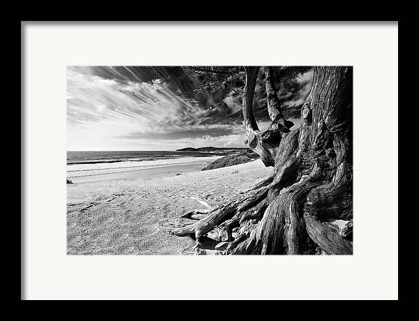 Carmel Beach Tree Roots Sandy Monterey Peninsula California Coastline Pacific Ocean Usa Black And Wh Framed Print featuring the photograph Tree Roots Carmel Beach by George Oze