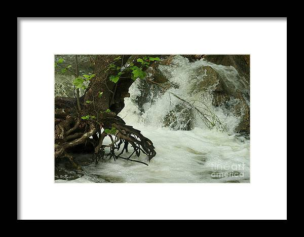 Cowley State Fishing Lake Framed Print featuring the photograph Tree Roots In The Water by E B Schmidt