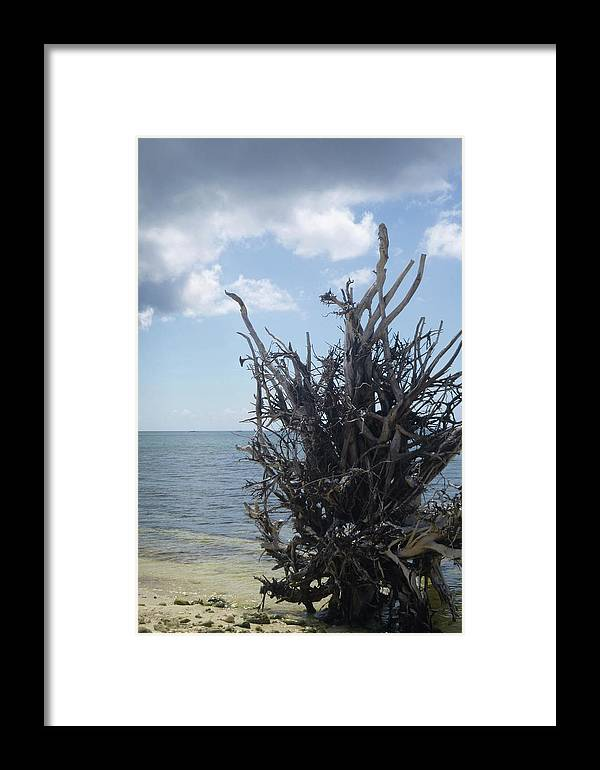 Tree Framed Print featuring the photograph Tree Roots by Joseph Mueller