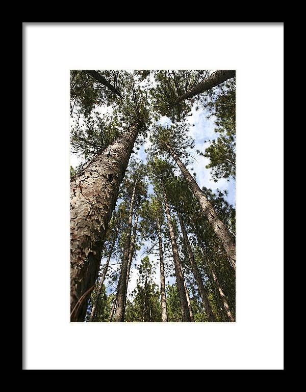 Autumn Framed Print featuring the photograph Tree Stand by Margie Wildblood
