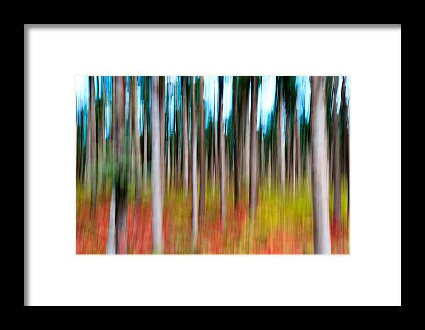 Abstract Framed Print featuring the photograph Treecolour by Gert Lavsen