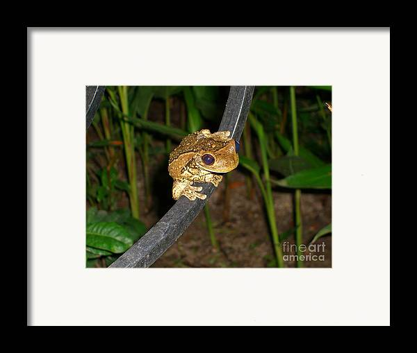 Tree Framed Print featuring the photograph Treefrog by Jim Thomson