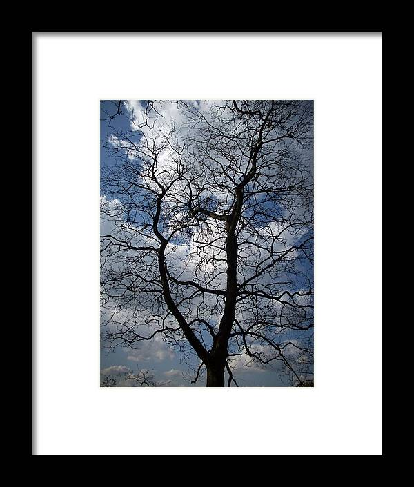 Trees Framed Print featuring the photograph Trees 1 by Helene Champaloux-Saraswati