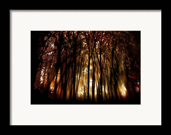 Digital Photography Framed Print featuring the photograph Trees 2 by Tony Wood