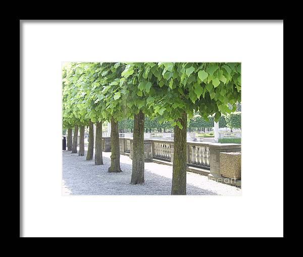 Trees Framed Print featuring the photograph Trees All In A Row by Deborah Selib-Haig DMacq