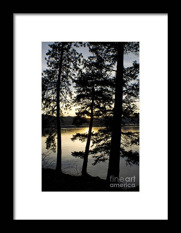 Trees Framed Print featuring the photograph Trees By The Lake by Idaho Scenic Images Linda Lantzy