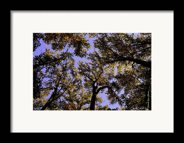 Trees Framed Print featuring the photograph Trees Conversing by Deborah Crew-Johnson