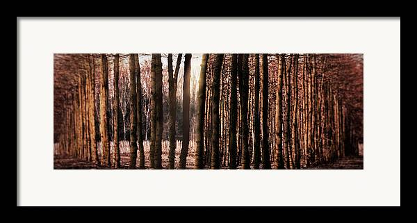 Trees Framed Print featuring the photograph Trees Gathering by Wim Lanclus