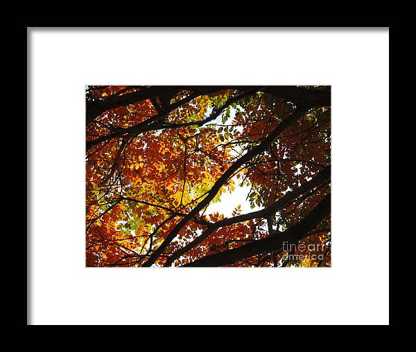 Trees Framed Print featuring the photograph Trees In Fall Fashion by Shylee Charlton