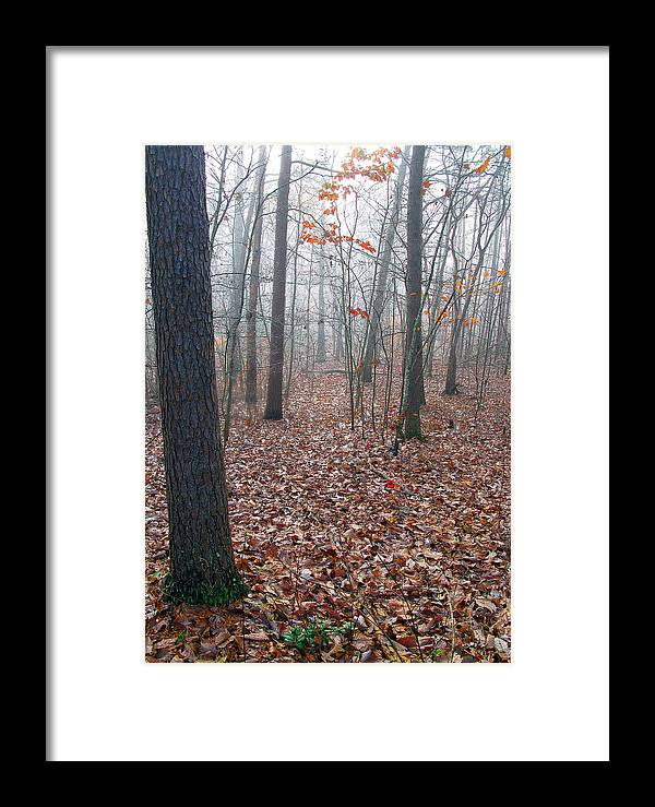 Trees Framed Print featuring the photograph Trees In Foggy Fall Woods by Richard Singleton