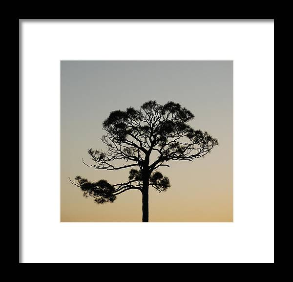Tree Framed Print featuring the photograph Trees In Sunset by Rob Hans