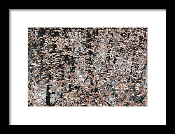 Trees Framed Print featuring the photograph Trees In The Leaves by Ayesha Lakes
