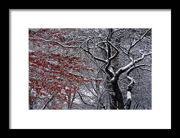 Landscape Framed Print featuring the photograph Trees by Kendall Eutemey