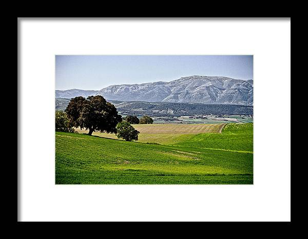 Field Framed Print featuring the photograph Trees by Nelson Mineiro