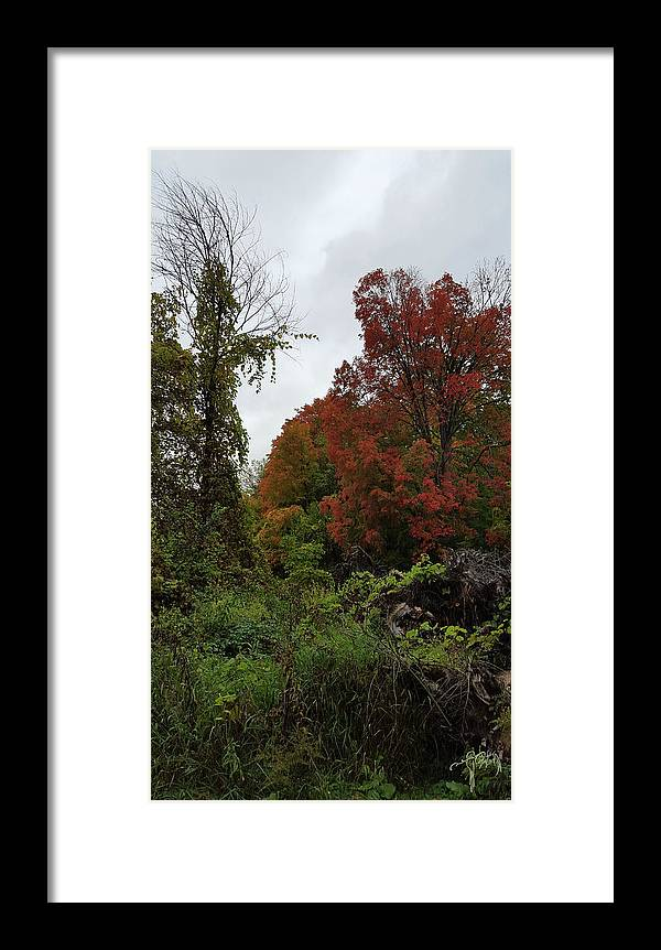 Trees Framed Print featuring the photograph Trees Of Colorful Leaves In Autumn Mi by Catalina Diaz