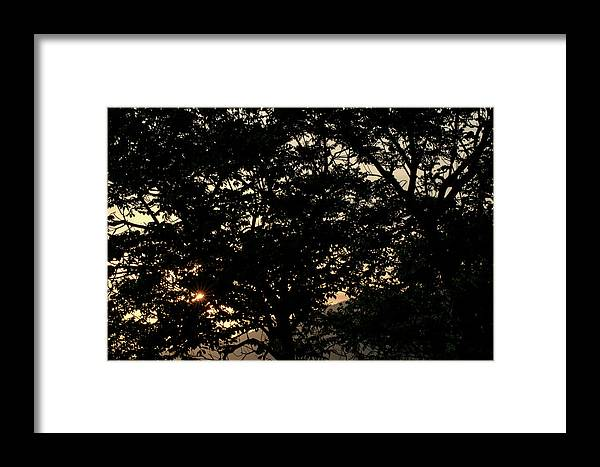 Sunset Framed Print featuring the photograph Trees - San Salvador II by Totto Ponce