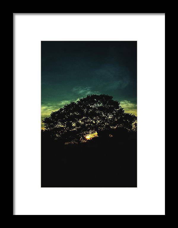 Sunset Framed Print featuring the photograph Trees - San Salvador Viii by Totto Ponce