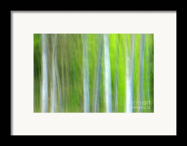 Trees Framed Print featuring the photograph Trees by Silke Magino