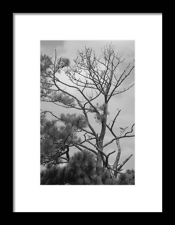 Trees Framed Print featuring the photograph Trees by Tina McKay-Brown