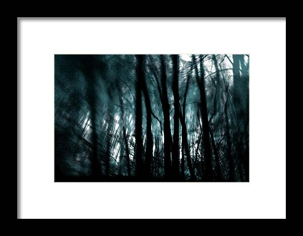 Digital Photography Framed Print featuring the photograph Trees by Tony Wood