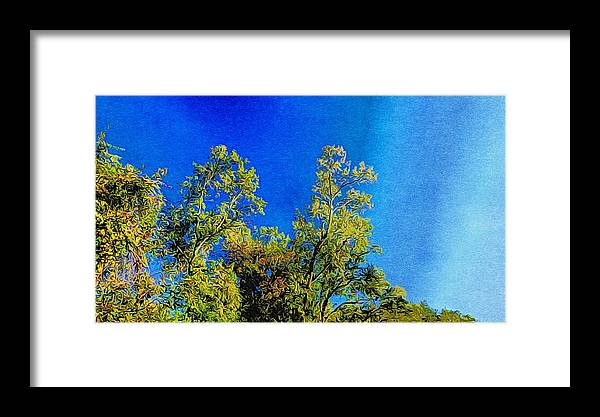 Trees Framed Print featuring the photograph Treetops by Paul Wilford