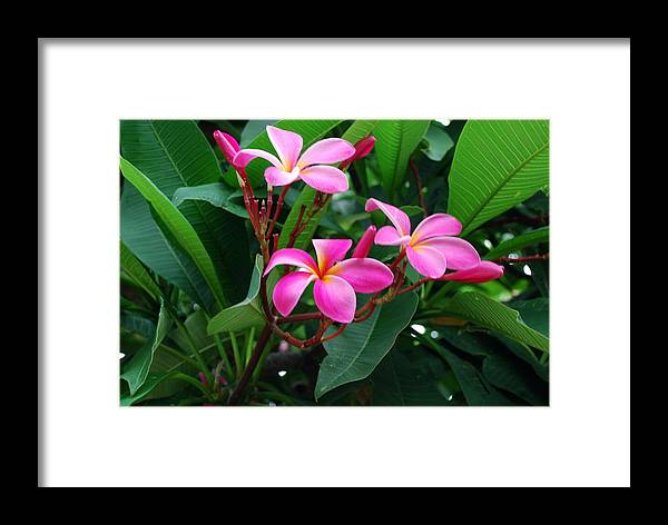 Floral Framed Print featuring the photograph Tres Floras by M Ryan