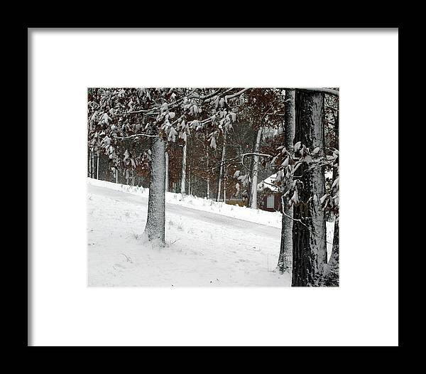 Snow Framed Print featuring the photograph Tress Of Snow by Lynn Reid