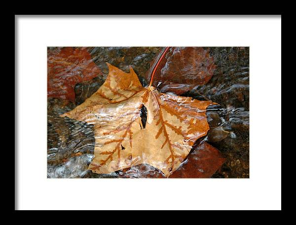 Autumn Framed Print featuring the photograph Tributaries by Deborah Gallaway