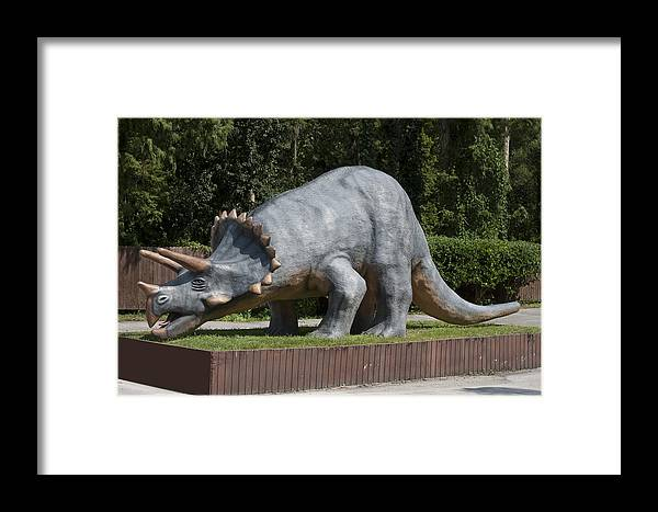 Dinosaur Framed Print featuring the photograph Triceratops by Carl Purcell