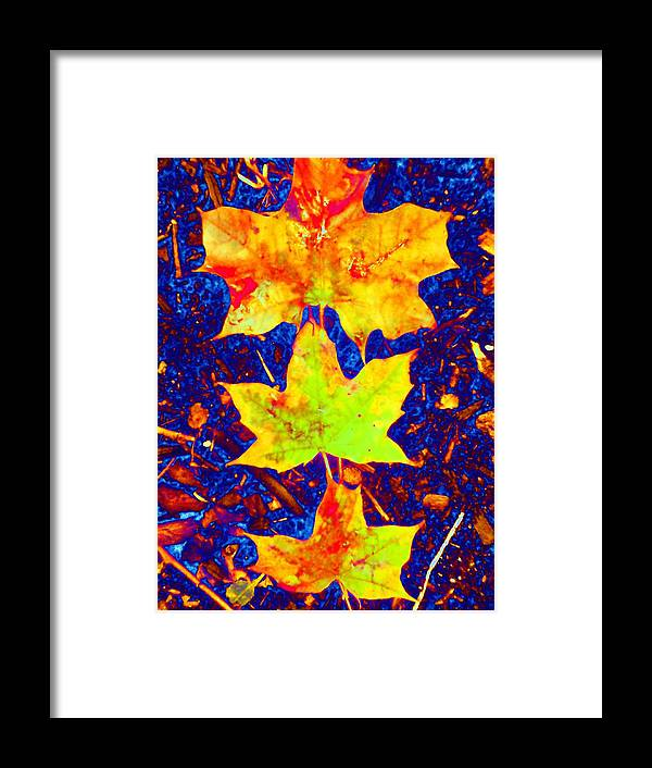 Maple Framed Print featuring the photograph Trio by Beth Akerman