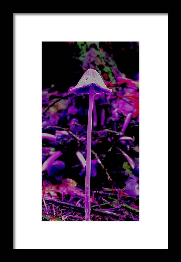 Mushroom Framed Print featuring the photograph Trip by Frederick Messner