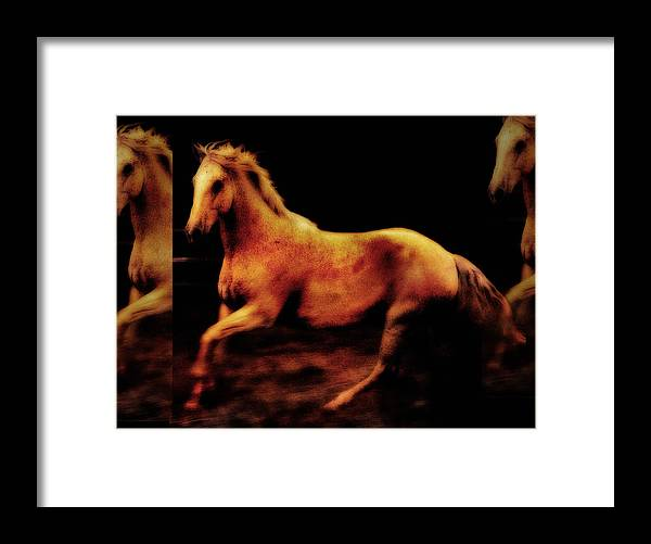 Horses Framed Print featuring the photograph Triple Horse by Nick Sokoloff