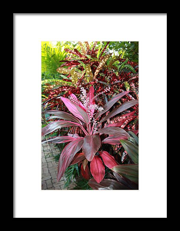 Floral Framed Print featuring the photograph Tropic Walk by Jim Derks