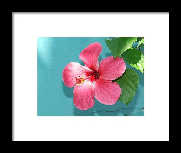 Flower Framed Print featuring the photograph Tropical Bloom by Vanda Sucheston Hughes