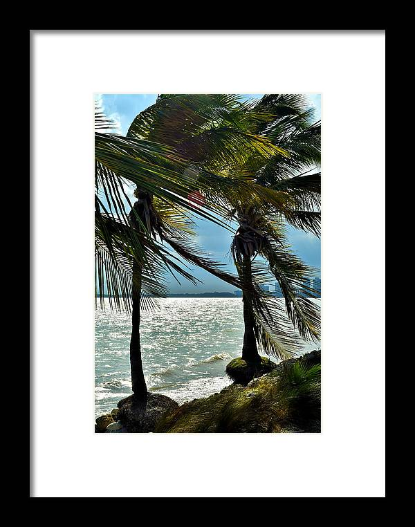 Palm Palm Tree Framed Print featuring the photograph Tropical Breeze by Camille Lopez