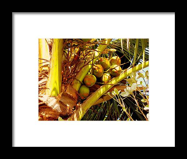 Coconuts Framed Print featuring the photograph Tropical Dreams 1 by Susanne Van Hulst