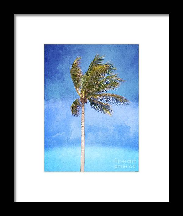 Palm Tree Framed Print featuring the digital art Tropical Palm Tree by Phil Perkins