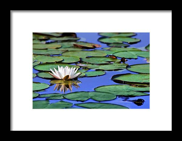 Water Lily Framed Print featuring the photograph Tropical Water Lily by Christina Rollo