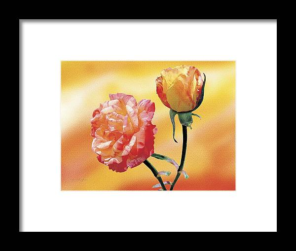 Rose Framed Print featuring the painting Tropicana Roses 2 by Jan Baughman