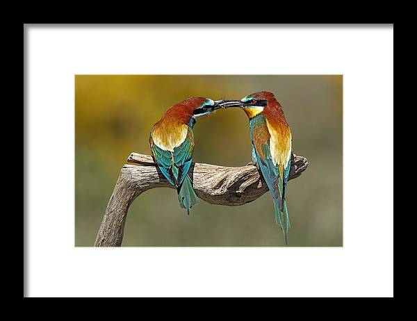 Nature Framed Print featuring the photograph True Love by Nicol?s Merino