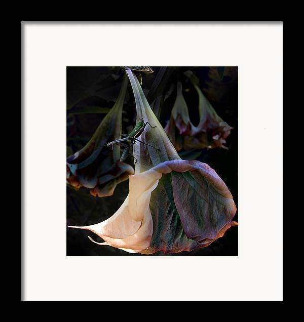 Flower Framed Print featuring the photograph Trumpet Flower by Rob Outwater