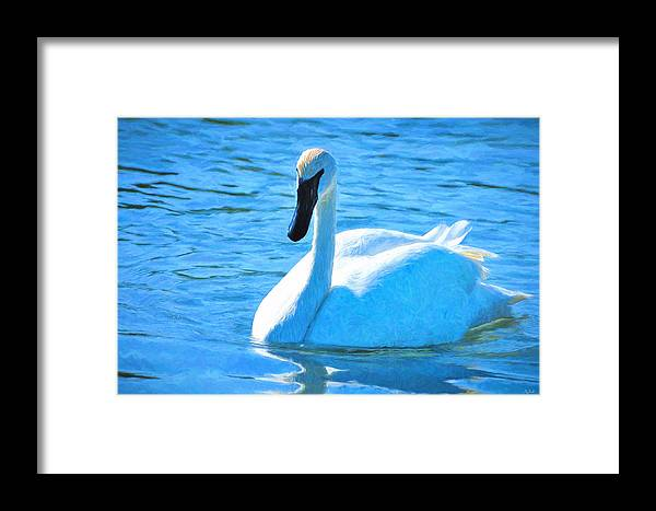 Swan Framed Print featuring the photograph Trumpeter Swan Impressions by Greg Norrell
