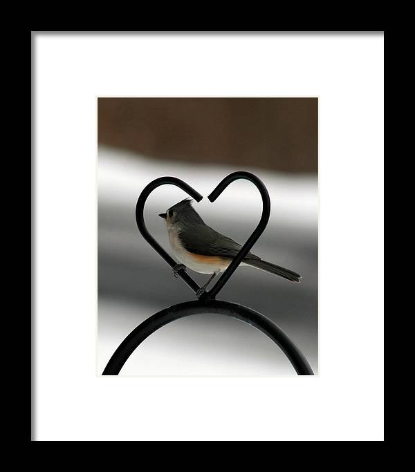 Titmouse Framed Print featuring the photograph Tufted Titmouse In A Heart by George Jones