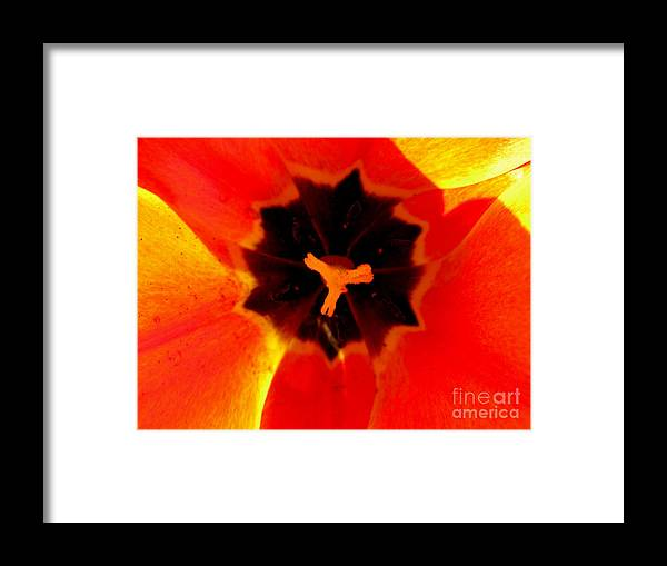 Tulip Framed Print featuring the photograph Tulip Art by PJ Cloud