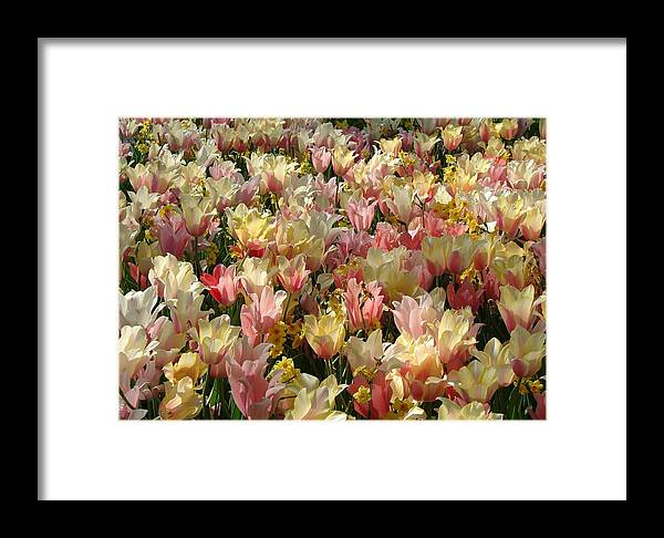 Landscape Framed Print featuring the photograph Tulip Delight 3 by Shiana Canatella