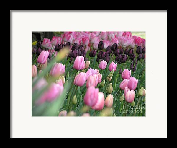 Tulips Framed Print featuring the photograph Tulip Dreams by Louise Magno