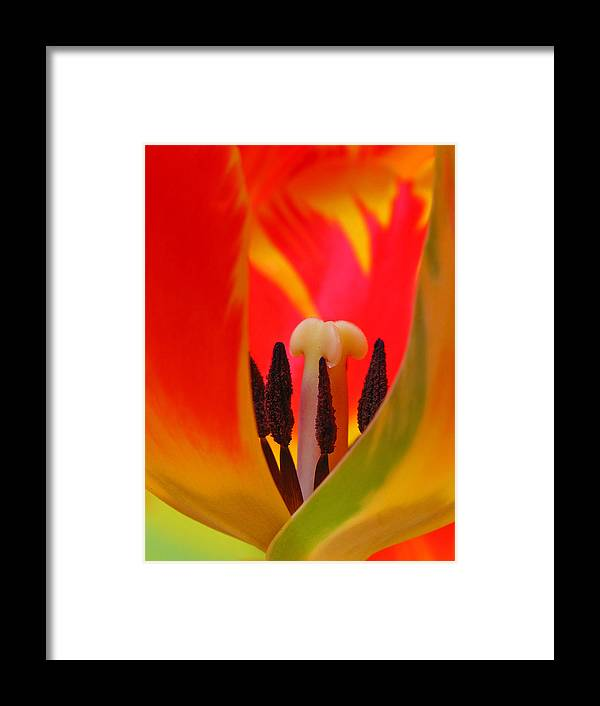 Tulip Framed Print featuring the photograph Tulip Intimate by Juergen Roth