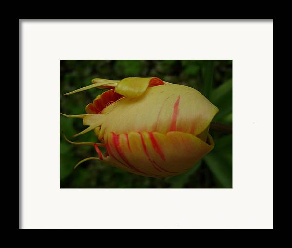 Nature Framed Print featuring the digital art Tulip Or Sea Creature by Laura Johnson