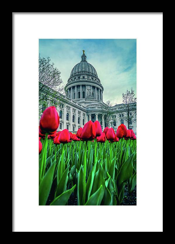Tulips Framed Print featuring the photograph Tulip Row by Rockland Filmworks
